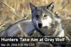 Hunters Take Aim at Gray Wolf