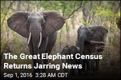 Elephant Numbers Down Drastically