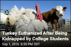 Turkey Euthanized After Being Kidnapped by College Students