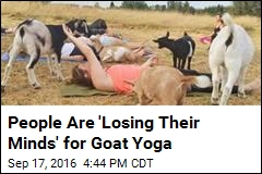 No Joke: People Are Doing Yoga With Goats