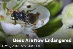 Bees Are Now Endangered