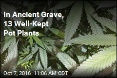 In Ancient Grave, 13 Well-Kept Pot Plants