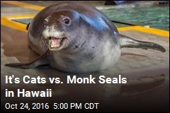 Hawaii's Monk Seals Face New Threat: Cats