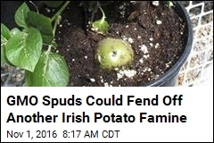 GMO Spuds Could Fend Off Another Irish Potato Famine