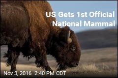 US Gets 1st Official National Mammal