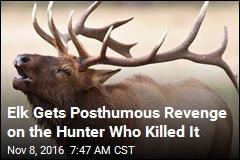 Hunter Kills Elk, Proceeds to Impale Self on Antler