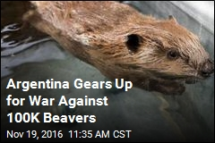 Argentina Gears Up for War Against 100K Beavers