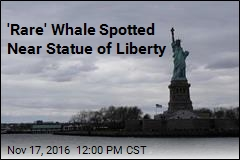'Rare' Whale Spotted Near Statue of Liberty