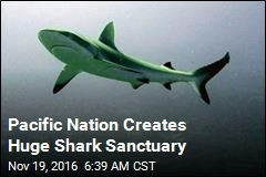 Pacific Nation Creates Huge Shark Sanctuary