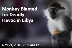 Monkey Blamed for Deadly Havoc in Libya
