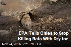 EPA Tells Cities to Stop Killing Rats With Dry Ice
