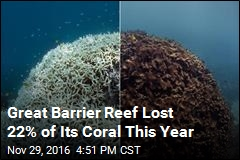 Great Barrier Reef Lost 22% of Its Coral This Year