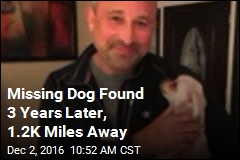 Missing Dog Found 3 Years Later, 1.2K Miles Away