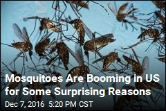 Mosquitoes Are Booming in US for Some Surprising Reasons