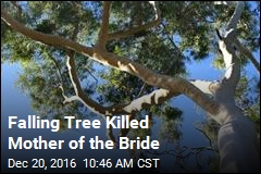 Falling Tree Killed Mother of the Bride