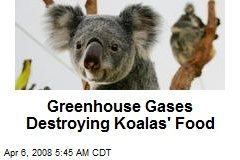 Greenhouse Gases Destroying Koalas' Food