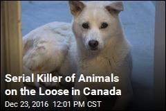 Someone Is Beheading Animals in Canada