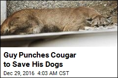 Guy Punches Cougar to Save His Dogs