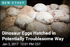 Dinosaur Eggs Hatched in Potentially Troublesome Way