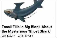 Fossil Fills in Big Blank About the Mysterious 'Ghost Shark'