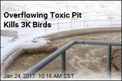 Overflowing Toxic Pit Kills 3K Birds