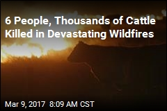 Thousands of Cattle Killed in Kansas Wildfires