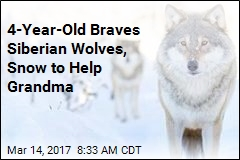 4-Year-Old Braves Siberian Wolves, Snow to Help Grandma