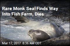 Endangered Monk Seal Dies in Fish Farm Net