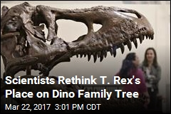 New Idea Shakes Up Dinosaur Family Tree for T. Rex, Others