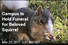 Campus to Hold Funeral for Beloved Squirrel