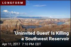A 'Dying' Reservoir, a Reemerging Canyon