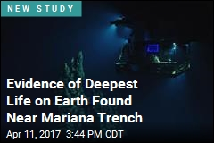 Evidence of Deepest Life on Earth Found Near Mariana Trench