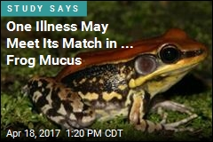 Mucus From Colorful Frog Could Contain Flu Fighter