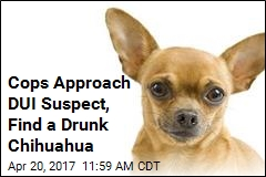 DUI Suspect Had Drunk Passenger: His Chihuahua