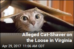 Someone Is Shaving Cats That Aren't There's in Virginia