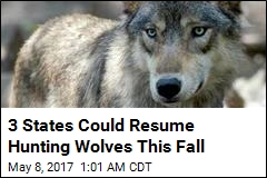 3 States Could Resume Hunting Wolves This Fall