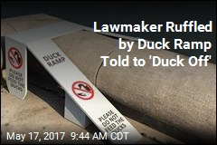 Twitter Scolds Lawmaker Ruffled by a Duck Ramp