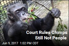 Court Rules Chimps Still Not People