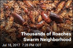 Thousands of Roaches Come From Manhole, Swarm Neighborhood