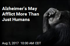 Humans' Closest Relative May Also Suffer Alzheimer's