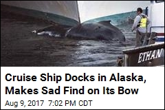 Cruise Ship Docks in Alaska, Makes Sad Find on Its Bow