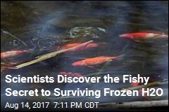 Scientists Discover the Fishy Secret to Surviving Frozen H2O