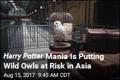 Asian Wild Owls in Danger as Demand for Pet 'Hedwigs' Soars