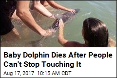 Baby Dolphin's Death Blamed on the Human Touch