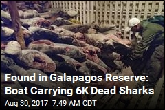 Found in Galapagos Reserve: Boat Carrying 6K Dead Sharks
