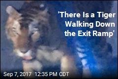 Circus Tiger Gets Loose, Terrifies in Georgia