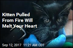 Kitten Pulled From Fire Will Melt Your Heart