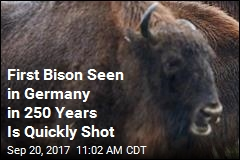 First Wild Bison in 250 Years Is Shot in Germany