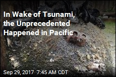 Tsunami Brought Unwelcome Colonists to America