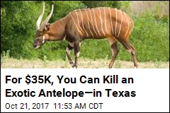 For $35K, You Can Kill an Exotic Antelope—in Texas